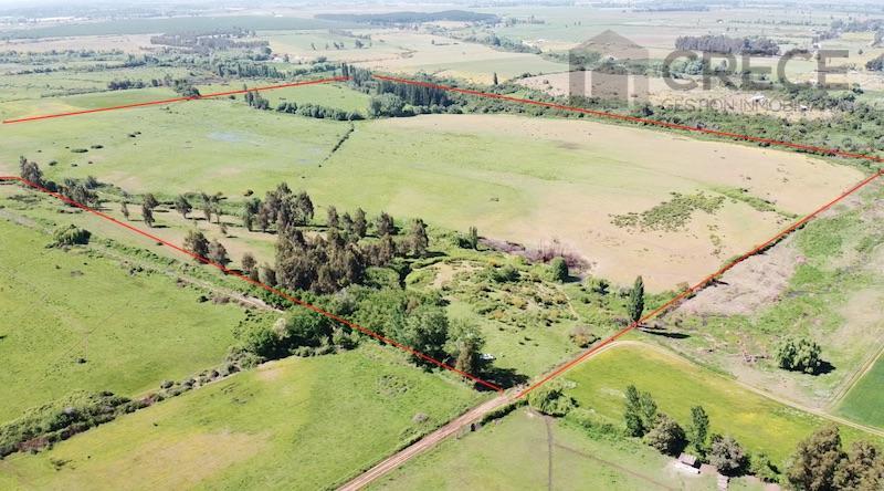 Parcela Agricola 41,8 hectáreas, Sector San Nicolás, Copihue, Séptima región del Maule, CHILE