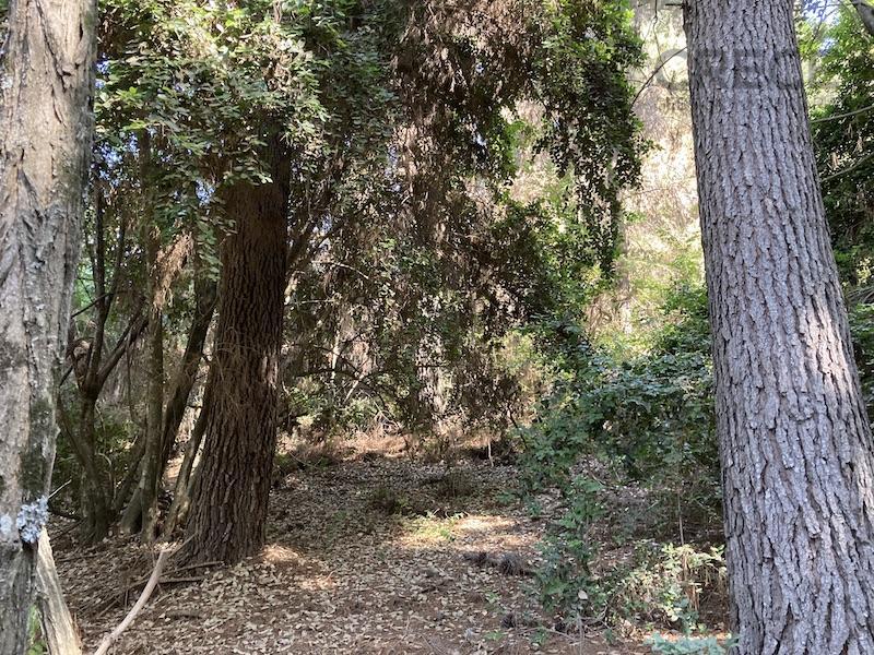 Parcela en Vilches, Talca, San Clemente, VII región del Maule, CHILE