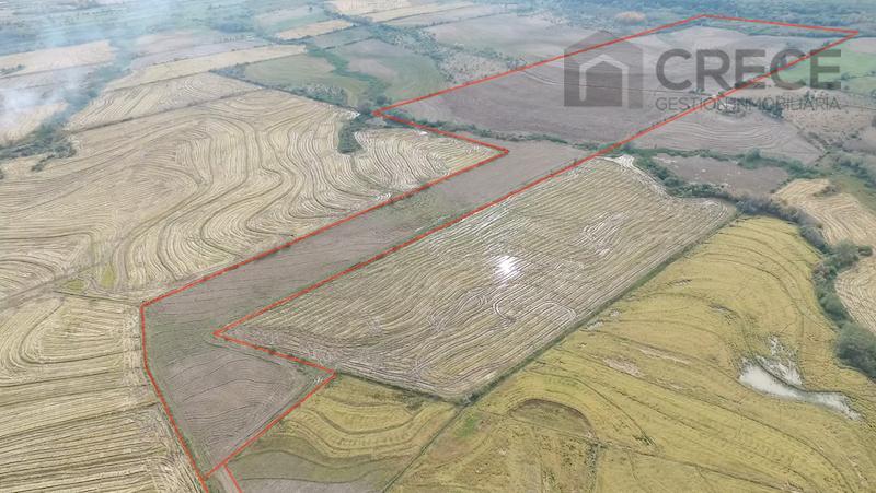 Arriendo Parcela agricola de 15,75 has, Sector Monteflor, Parral