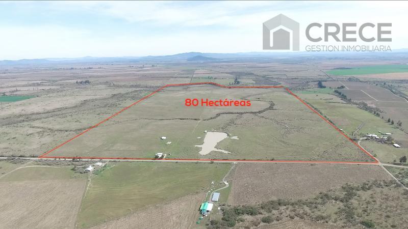 Campo 80 hectáreas Sector Paso Hondo, Parral, VII region
